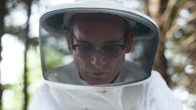 John O'Hazza moves bees from a nucleus, or concentrated beehive, into a much larger hive where the colony can grow.