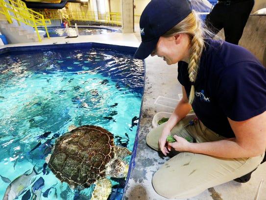 Alyssa Daily, an animal care specialist, feeds Charlie,