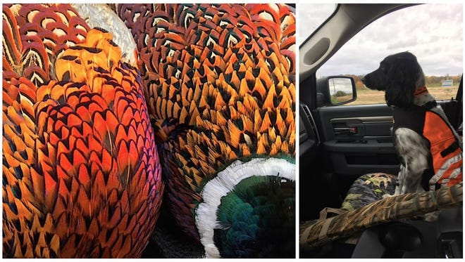 Memories made afield with a four-legged friend will be cherished for many years to come, especially hunting pheasants.