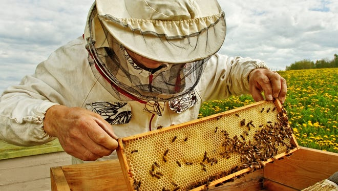 Interested in bees? The Alabama Beekeeping Symposium will be online this year, and is set for Feb. 6-7. The registration fee is $20.