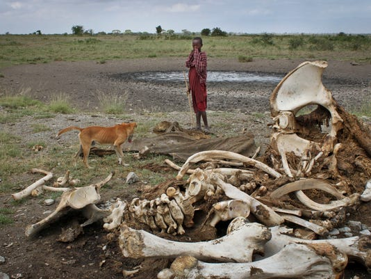 AP AFRICA ELEPHANT SLAUGHTER I FILE TZA
