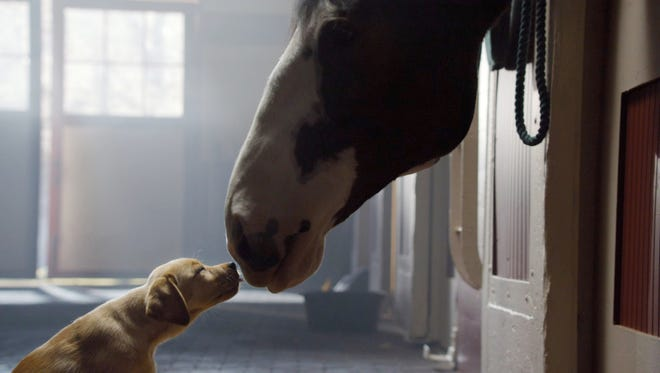 """A still frame from the Budweiser Commercial """"Puppy Love"""""""