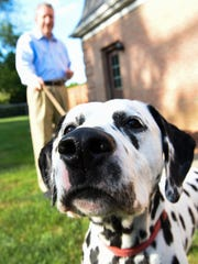 Grady, a Dalmatian owned by Charlie and Lynn Garvin of Marion, gets up close and personal with the camera during a recent photo session at the Garvin home. Grady is 8 years old.