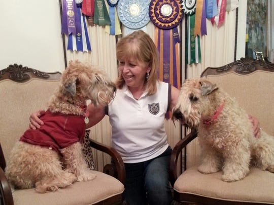 Dorice Stancher of Hawthorne with her two wheaten terriers, Charlie, left, and Krista. Unlike breeds such as golden and Labrador retrievers, wheatens are not considered water dogs, but that didn't stop Krista from winning a first-place ribbon in the dock-diving trials on Long Island last spring. Stancher's plucky little wheaten performed well enough to be invited to the national championships in Florida this week.