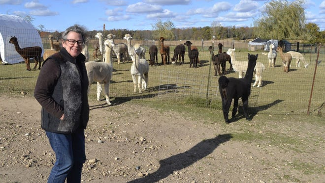 LeAnna Franklin, who owns and operates KeLe Alpacas in Kewaunee with husband Keith Bancroft, stands in the pasture with the 30 alpacas on the farm. Franklin recently was diagnosed with breast cancer.