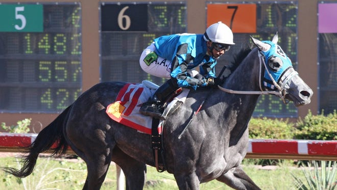 Diabolical Dame, shown here winning last year's New Mexico Classic Cup Oaks at Zia Park, is the morning-line favorite for Saturday's Carlos Salazar Stakes at the Downs at Albuqeurque.
