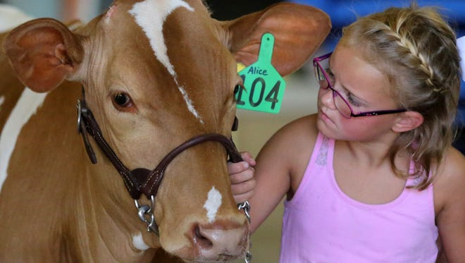 Evie Kavanaugh of Kaukauna keeps a close watch on Alice as they practice before the Kids & Calves competition at last year's Outagamie County Fair in Seymour.