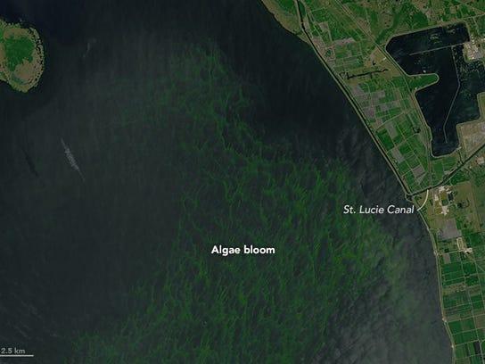 NASA Earth Observatory images of algae bloom on Lake