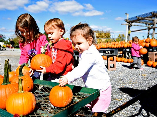 Addison Albright, 4, and her siblings Reid Albright, Lena Albright,  and Macy, all 2, carry their pumpkins to their cart while with their parents, Amanda and Steve Albright, of Manchester, at Whitecombs Farm Market in York, Pa. on Saturday, Oct. 10, 2015. Dawn J. Sagert - dsagert@yorkdispatch.com