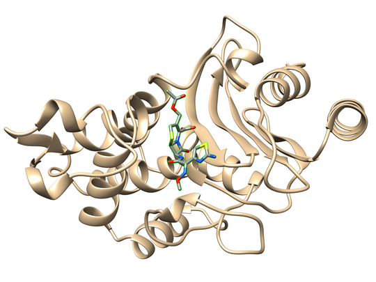 The three dimensional structure of a beta lactamase enzyme shown is poised to break down the antibiotic cefotaxime.
