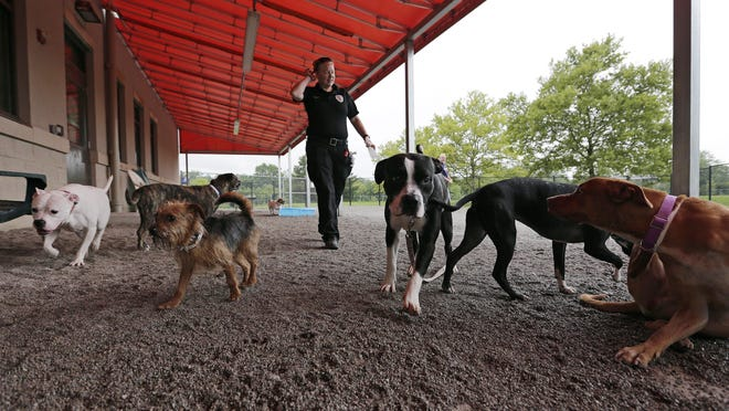 Franklin County deputy dog warden Leighann Adams supervises a dog playtime at the Franklin County Dog Shelter in this 2018 file photo.  Dog license proceeds help to fund the Franklin County Dog Shelter.