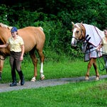 Valeria Borovkoff, left, guides Mac, a Rheinland Pfalz Saar horse, and Ali Lindsay guides Gambler, a Canadian Sport Horse, along a path toward the stable at the Cedar Crest Farm Equestrian Center in Pine Plains. Gambler is being treated for Lyme disease.