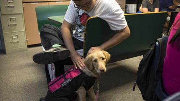 Gracie, a therapy dog, is petted by Edward Perez in Pam Swart's classroom, at Apache Junction High School