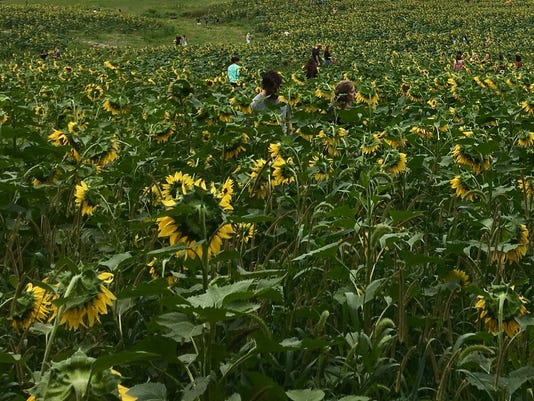 Hope Field-IMG-6540-2.jpg