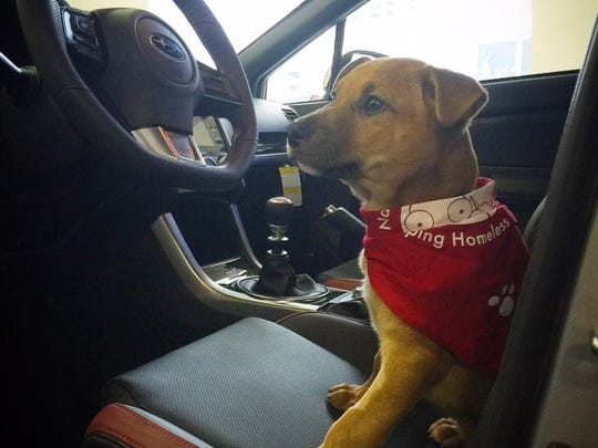 Lunchbox looks right at home behind the wheel. His first stop: a nearby drive-thru window for French fries.