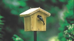Double check your nest boxes to be sure they are clean and ready for new families of birds.