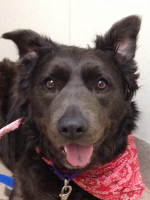Xena is waiting at the Oshkosh Area Humane Society for her forever home.