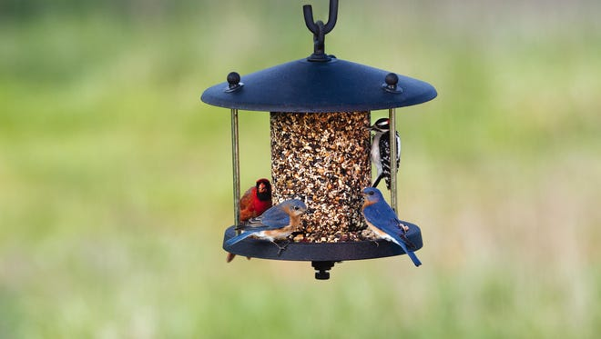 Don't know the species of birds on this feeder? There's an app for that.