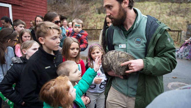 Eli Strull of the Western North Carolina Nature Center holds Nibbles, a female groundhog while letting a crowd of about 100 pet the 12-year-old weather predicting rodent did not see her shadow predicting an early spring Tuesday at the nature center.