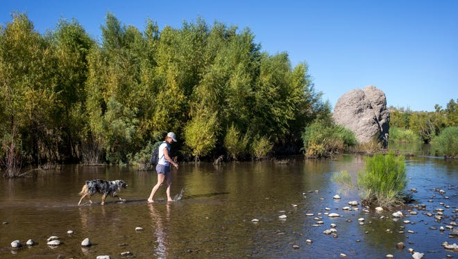 Kim Naugle walks her dog, Opie, on Nov. 7, 2016, in the Verde River at Needle Rock Recreational Area.