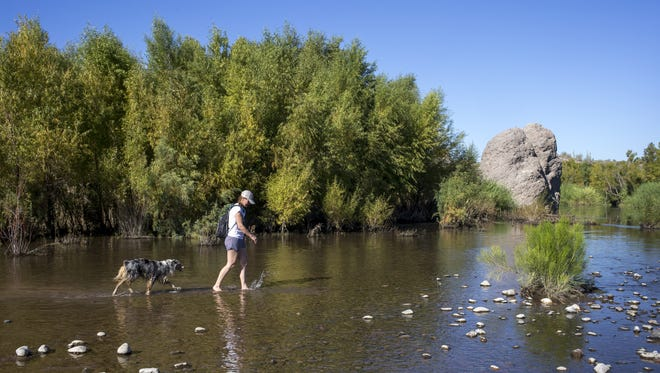 Kim Naugle walks her dog, Opie, in the Verde River at Needle Rock Recreational Area in Tonto National Forest.