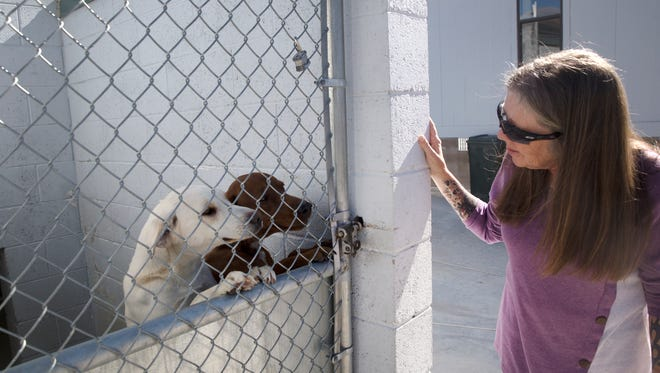 Aztec Animal Shelter director Tina Roper checks on some of the shelter's dogs on Wednesday.
