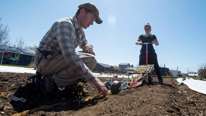 In this Wednesday, April 25, 2018, photograph, Ben Pfeffer, front, looks on while his apprentice, Hannah Coakley, rolls a Japanese paper pot transplanter down a row at Raisin' Roots Farm in Fort Collins, Colo. The farm, neighbored by roads and a housing development, could likely fetch a hefty payday from a housing developer, but landowner Dennis Vanderheiden is committed to keeping it urban agriculture.