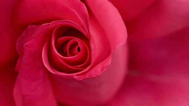 Bring your best blooms to the Glendale Rose Society's South by Southwest Rose Show on Saturday.