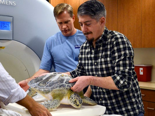 Sea Turtle Gets an MRI