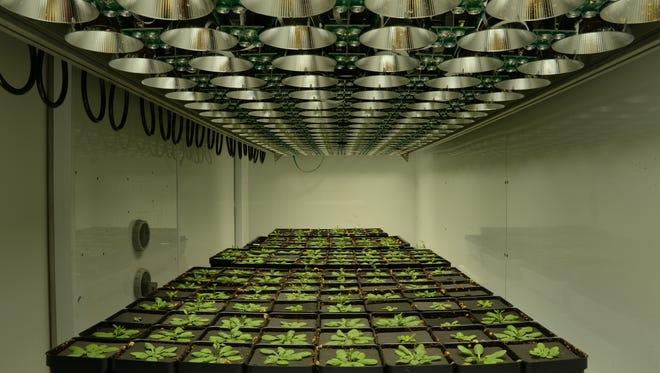 Dynamic Environmental Photosynthetic Imaging at Michigan State University.