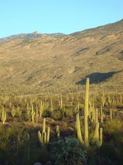 The Hugh Norris Trail begins in the Tucson Mountain District of Saguaro National Park.