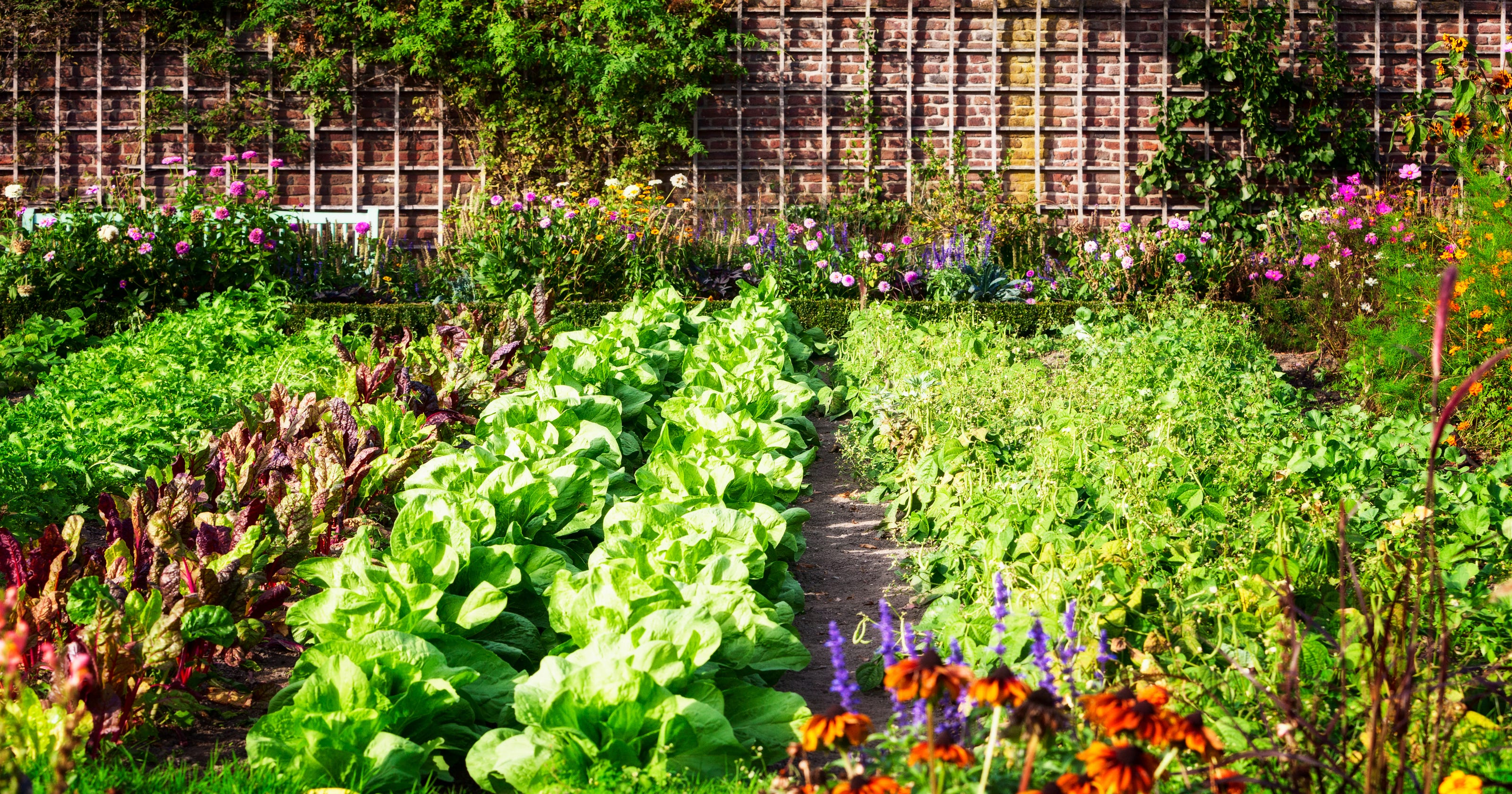 How To Start Your Own Backyard Vegetable Garden