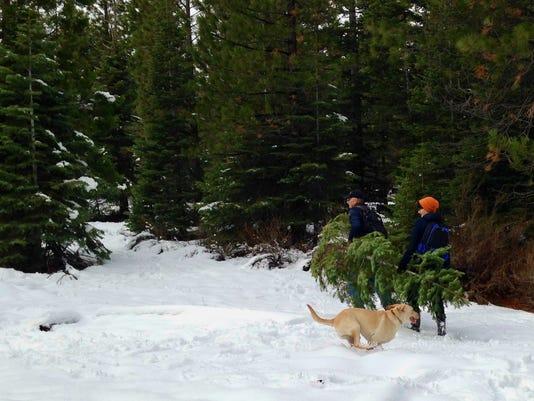 Tree hunt.jpg