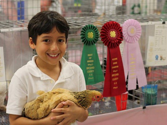 A youth showcasing his prize winning chicken at the