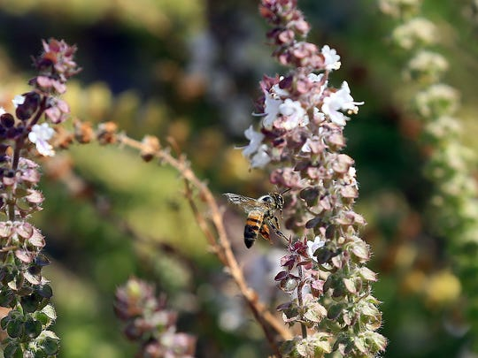 "Nueces Master Gardeners will host Justin Jones who will present ""Honey Bees 101"" at noon Tuesday, June 20, at the Garden Senior Center, 5325 Greely Drive. Cost: Free. Information: 361-701-6207."