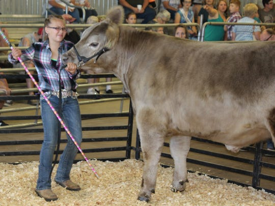 Kayleigh Aiken works hard to keep her grand champion