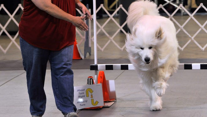 Jeanne-Anne Polichetti of Horsham, Pennsylvania, guides her 5-year-old Great Pyrenees named Dyson over a bar during the Abilene Kennel Club's annual dog show Saturday at the Taylor County Coliseum. The event concludes Sunday.