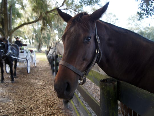 Board a carriage with Ocala's Horse Country Carriage