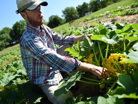 """Taylor Yowell reveals some of the many varieties of squash growing on his farm in Madison County. """"(This is) a farm where produce is coming straight from the caretaker ... fresher than it's ever going to be,"""" Yowell said."""