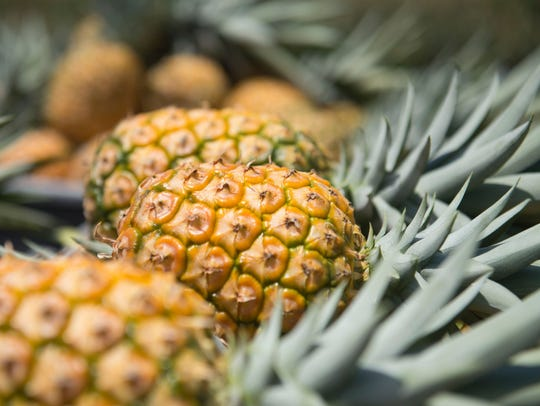 The 31st annual Jensen Beach Pineapple Festival is this weekend in downtown Jensen Beach.