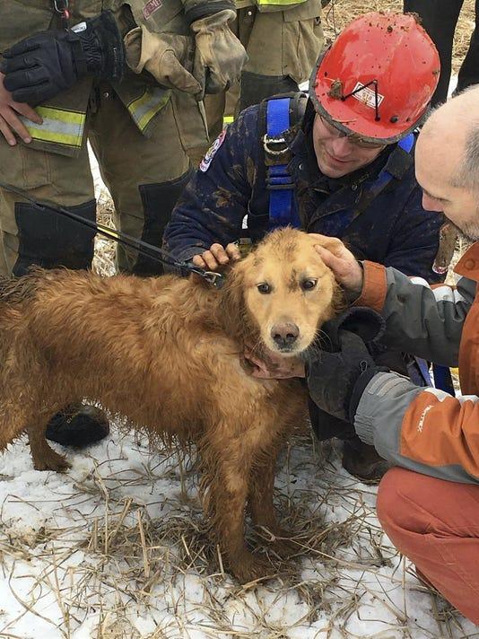 Dog Sinkhole Rescue