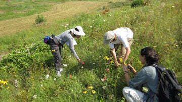 Through a Landowner Conservation Report, ecologists can help landowners identify and discover rare species and habitats such as plants on their property.