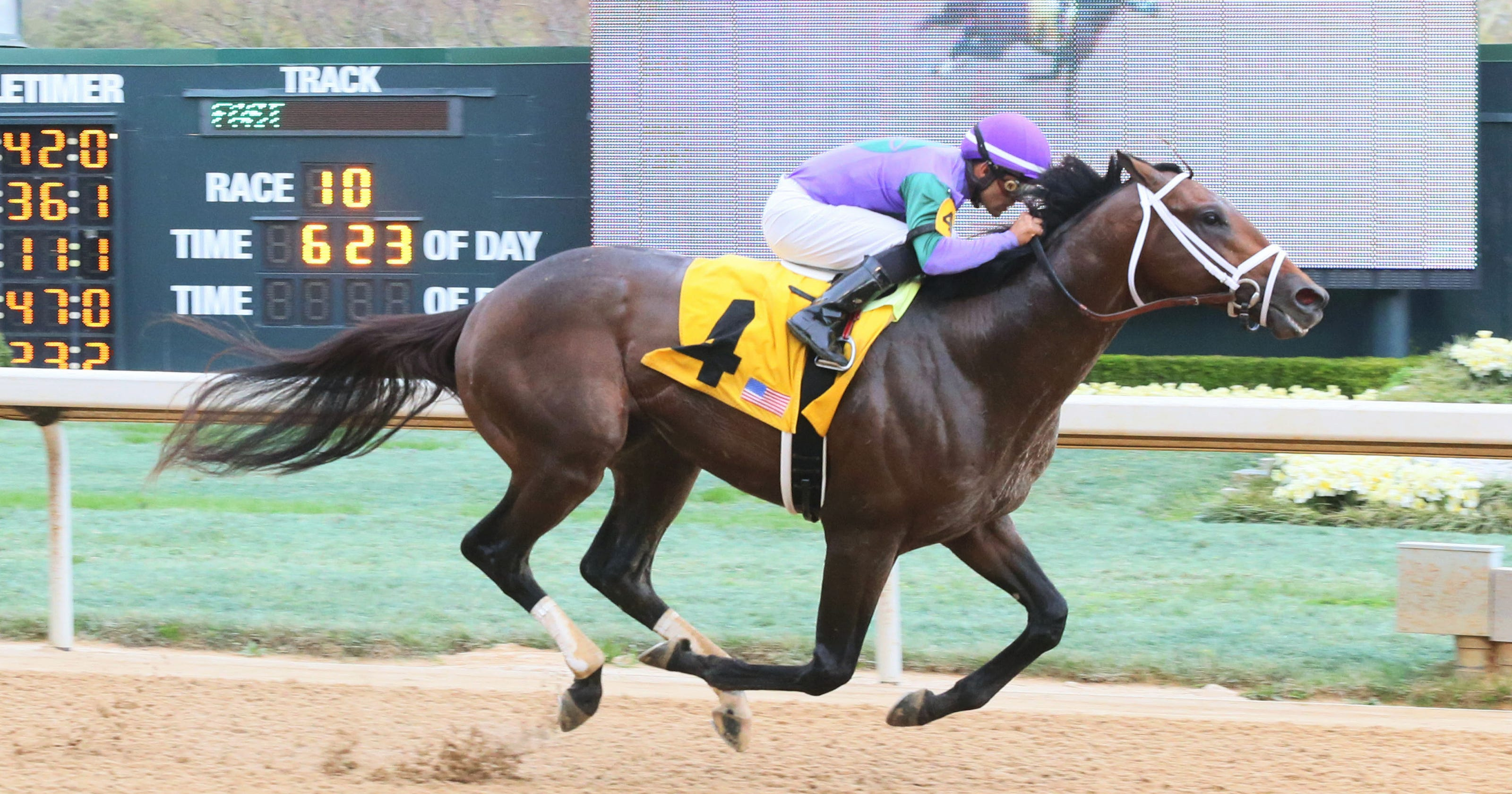 Robert And Lawana Lows Thoroughbred Magnum Moon Will Likely Be Favored To Win The Arkansas Derby On Saturday