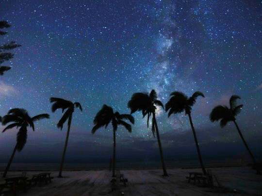 Wind blown palm trees and the stars dot the landscape