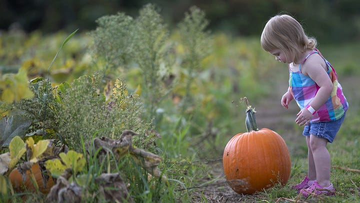 Best pumpkin patches around Indianapolis for corn mazes, hayrides and fall fun