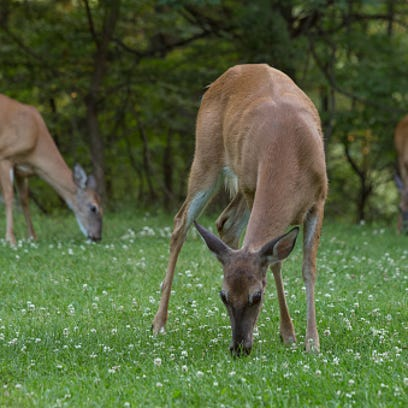 Committee to review state's CWD plan
