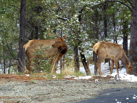 -elk-times-two