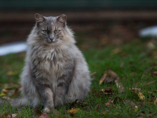 636435751334436244-Cats048.jpg