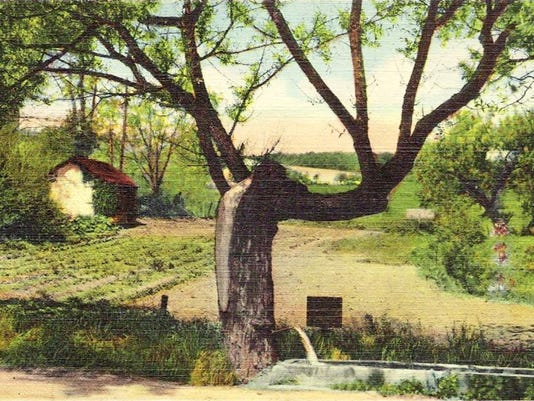 Willow Spout 1930s