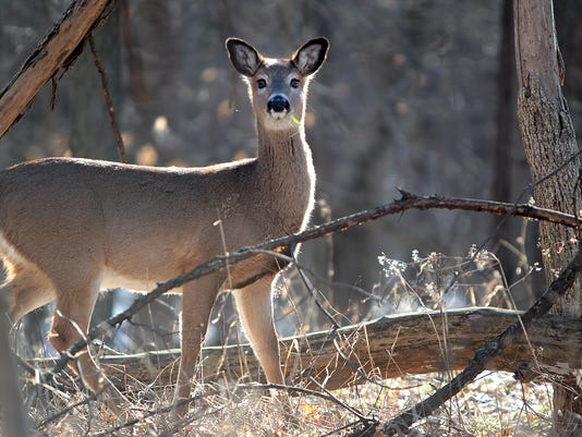 court rules against dnr in high fence hunting fight
